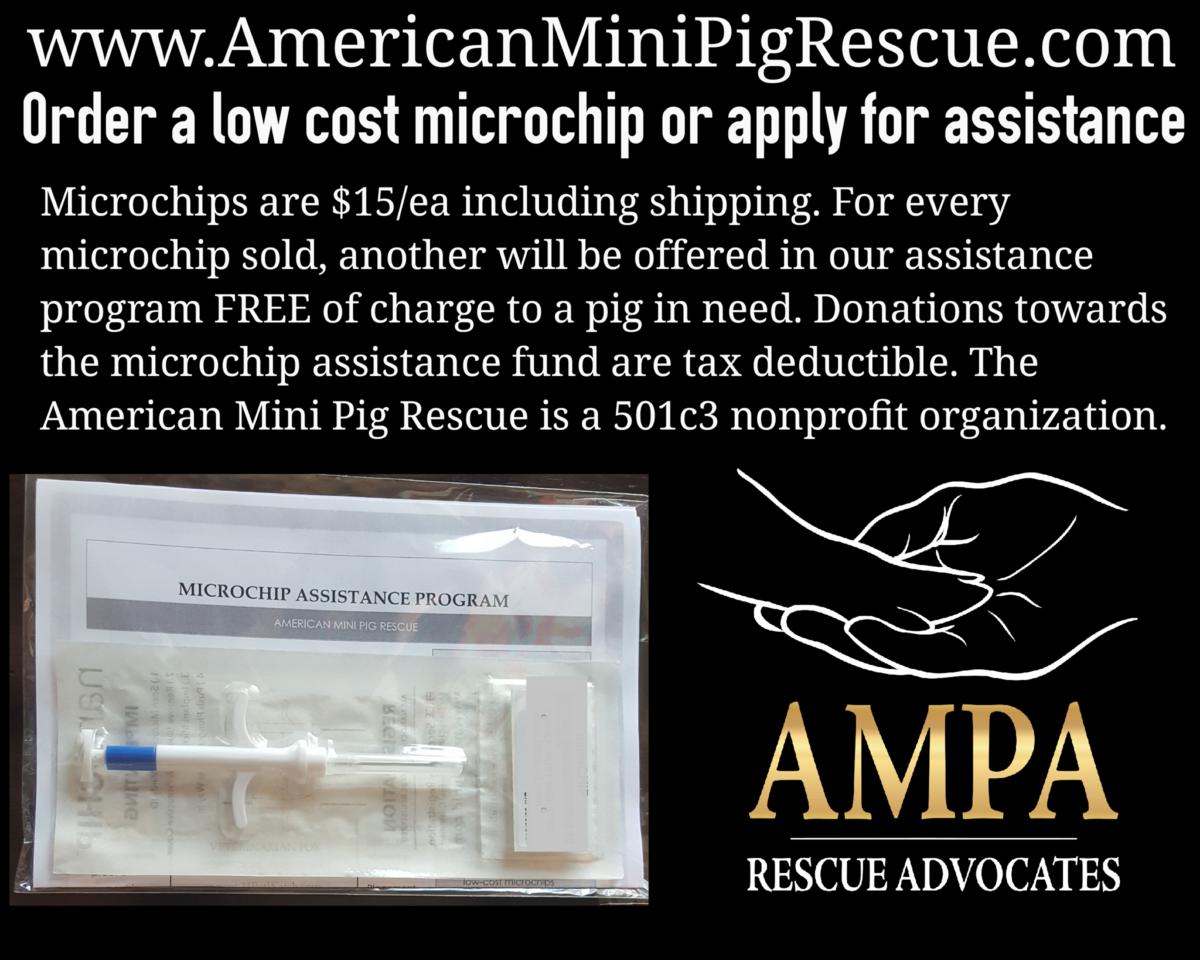 mini pig microchip assistance