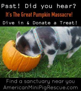 pumpkin drive, pumpkin massacre, the great pumpkin