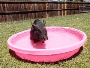 screening wading pool