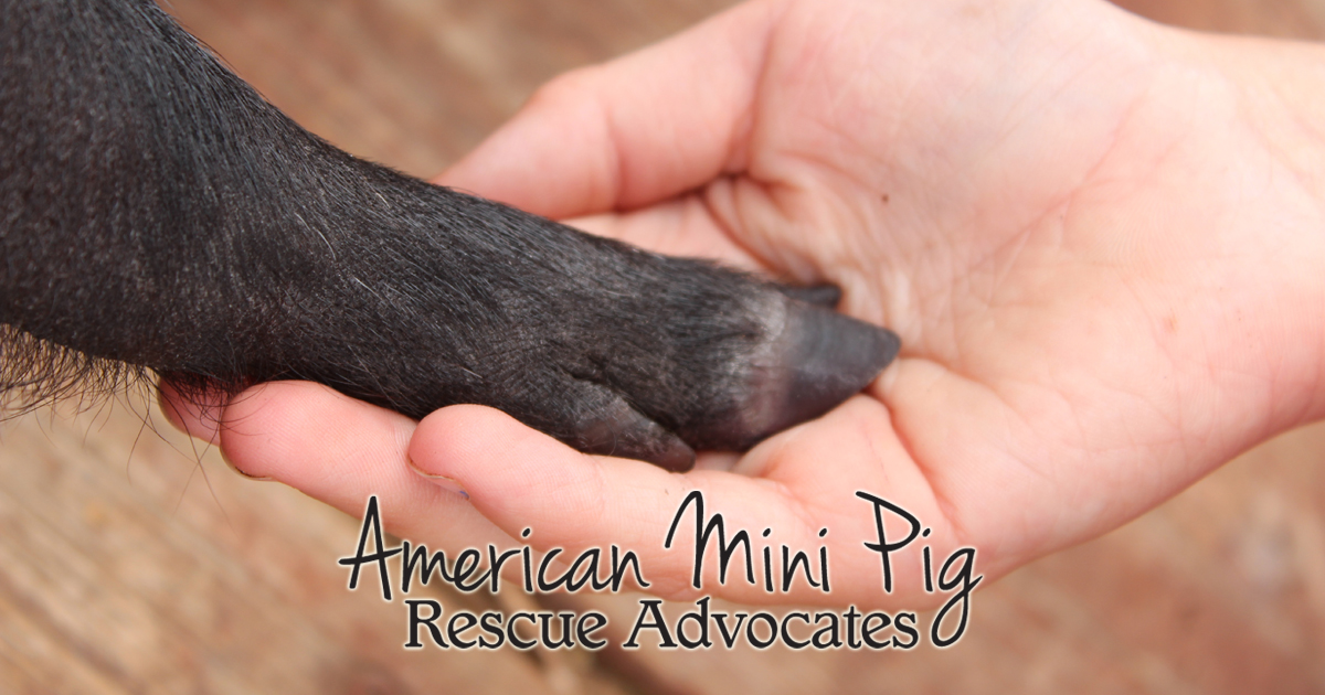 American Mini Pig Rescue Advocates