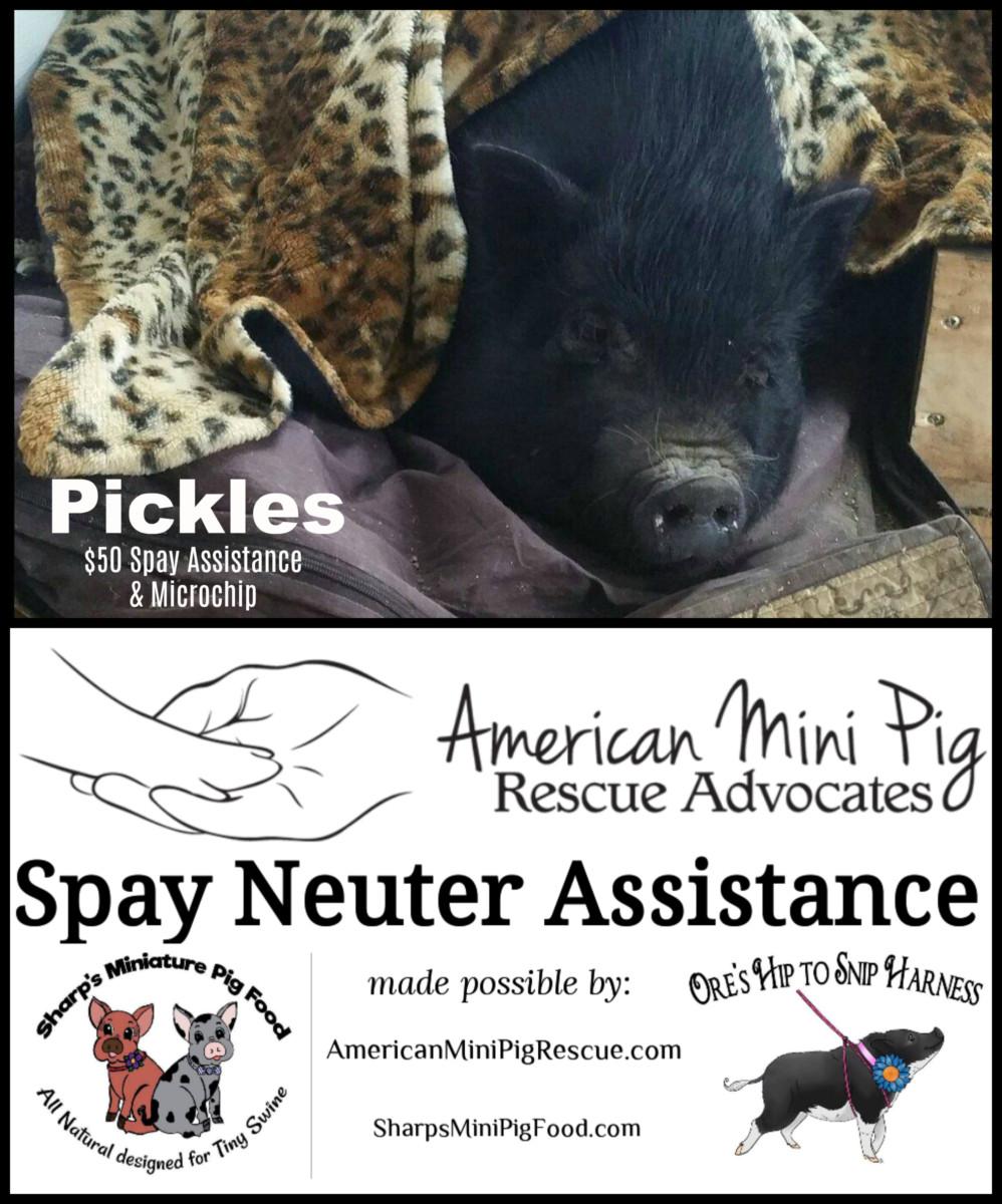 PicMonkey Pickles