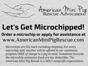 mini pig microchip