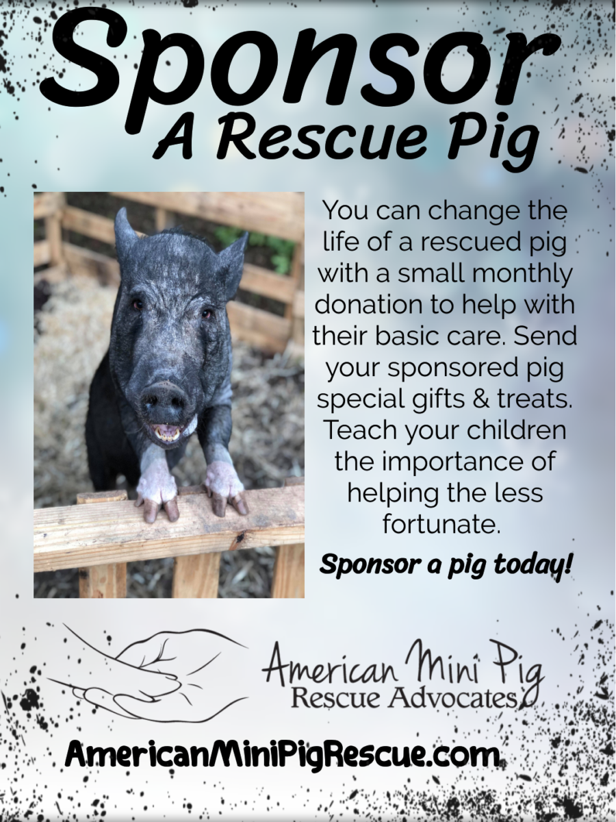 Sponsorship Drive Together As A Community We Can Sponsor Pigs In Rescues Or Sanctuaries Is Recurring Monthly Gift Donation Intended To
